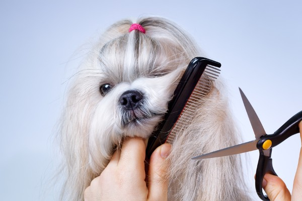 10 Best Pet Grooming Salons In Mumbai For Your Pooch