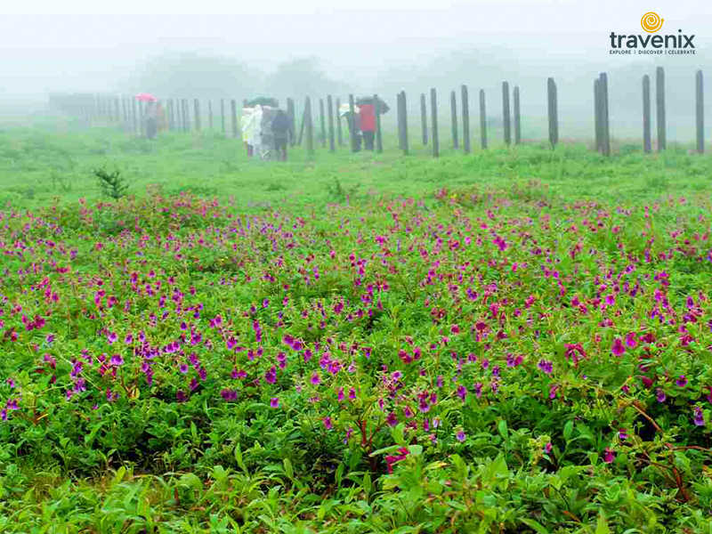 Khaas Valley Flowers Weather