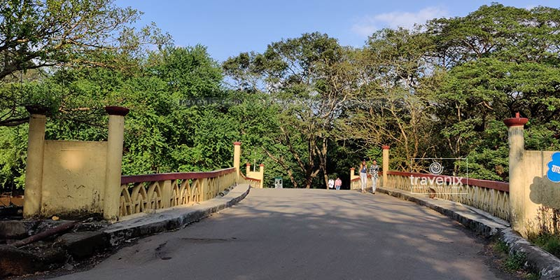Lush greenery at Sanjay Gandhi National Park