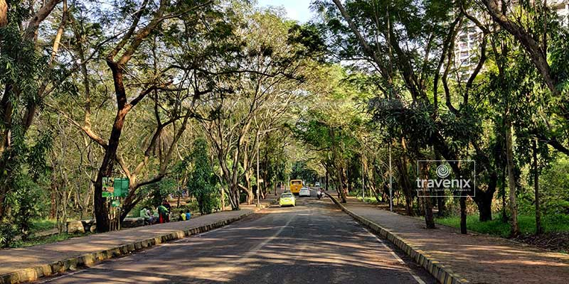 Scenic roads in side Sanjay Gandhi National Park