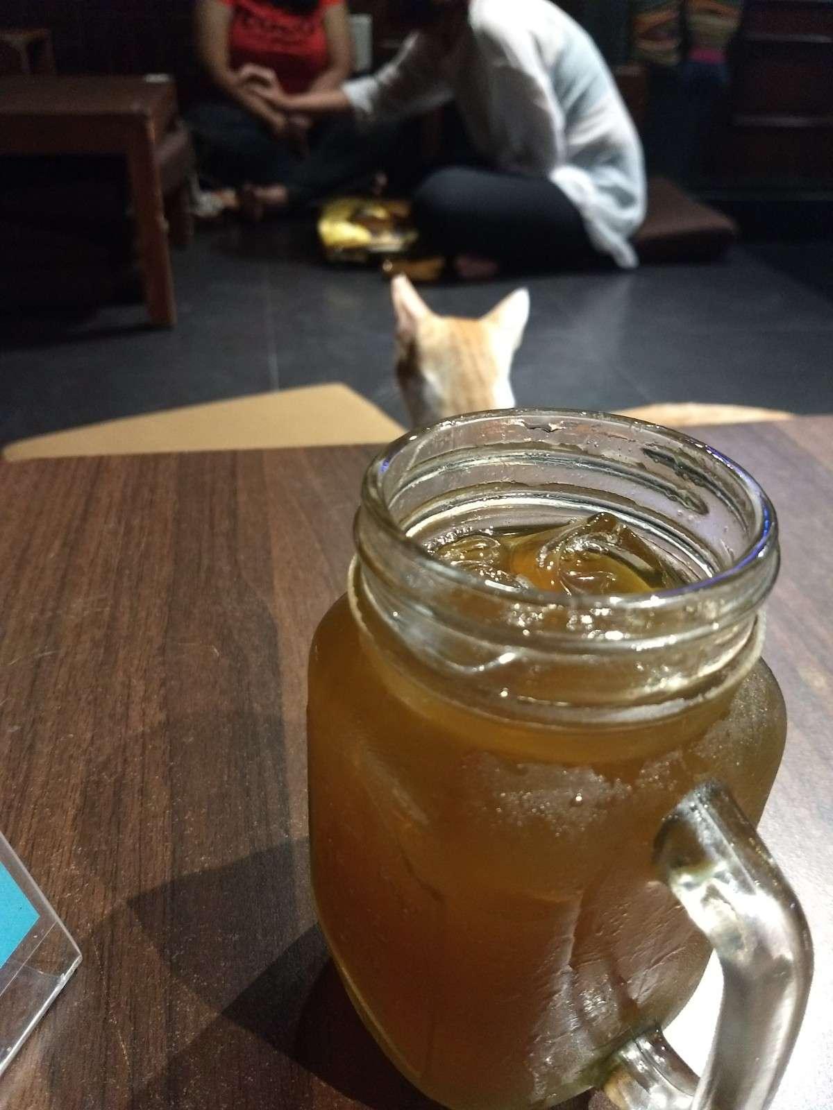 Green Apple Iced Tea at Cat Cafe Studio, Mumbai - Zomato
