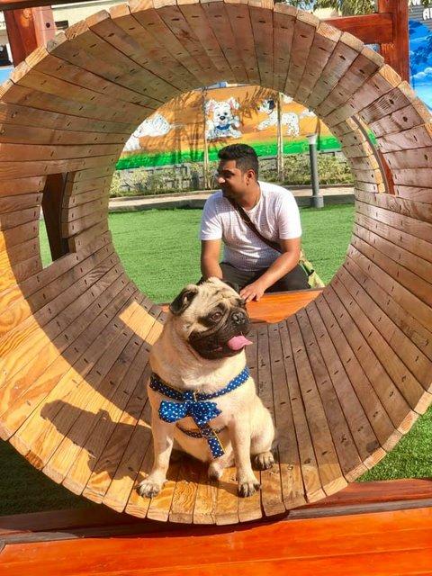 GHMC Dog Park