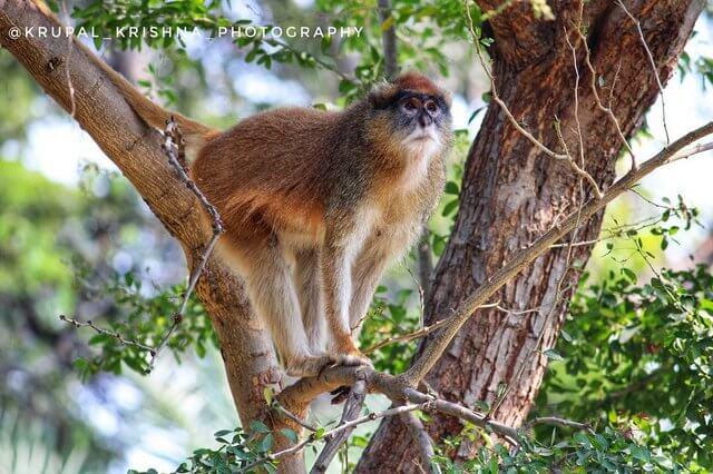 Eturnagaram Wildlife Sanctuary