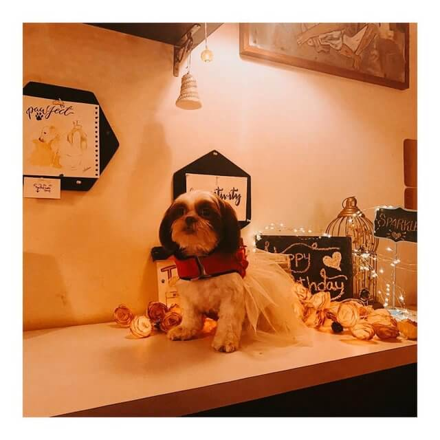The Pet Cafe Hyderabad